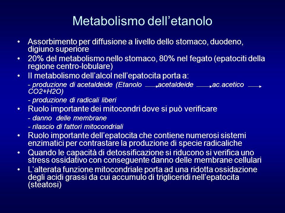Metabolismo delletanolo Assorbimento per diffusione a livello dello stomaco, duodeno, digiuno superiore 20% del metabolismo nello stomaco, 80% nel fegato (epatociti della regione centro-lobulare) Il metabolismo dellalcol nellepatocita porta a: - produzione di acetaldeide (Etanolo acetaldeide ac.acetico CO2+H2O) - produzione di radicali liberi Ruolo importante dei mitocondri dove si può verificare - danno delle membrane - rilascio di fattori mitocondriali Ruolo importante dellepatocita che contiene numerosi sistemi enzimatici per contrastare la produzione di specie radicaliche Quando le capacità di detossificazione si riducono si verifica uno stress ossidativo con conseguente danno delle membrane cellulari Lalterata funzione mitocondriale porta ad una ridotta ossidazione degli acidi grassi da cui accumulo di trigliceridi nellepatocita (steatosi)