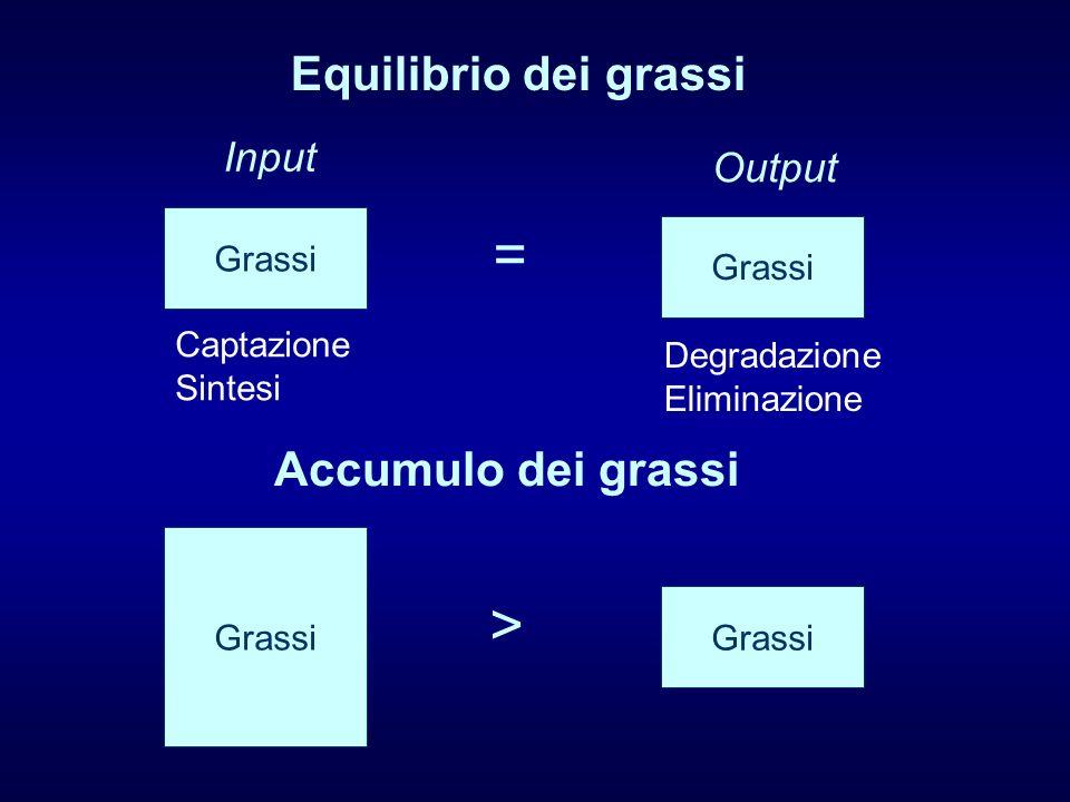 Equilibrio dei grassi Accumulo dei grassi Grassi Input Output Captazione Sintesi Degradazione Eliminazione = Grassi >