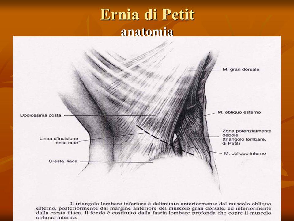 Ernia di Petit anatomia