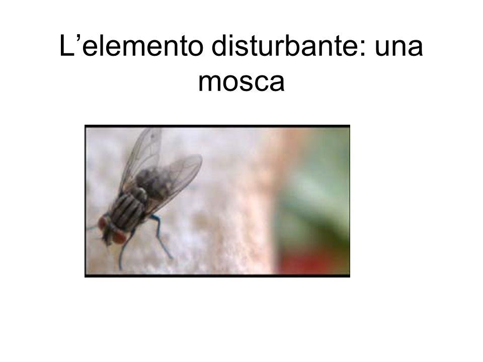 Lelemento disturbante: una mosca
