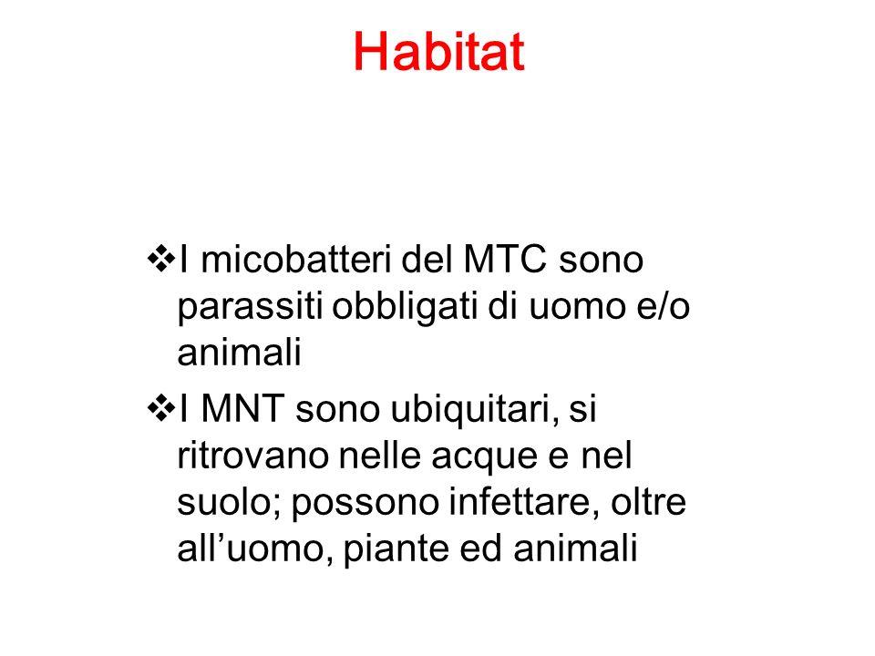 Habitat I micobatteri del MTC sono parassiti obbligati di uomo e/o animali I MNT sono ubiquitari, si ritrovano nelle acque e nel suolo; possono infett
