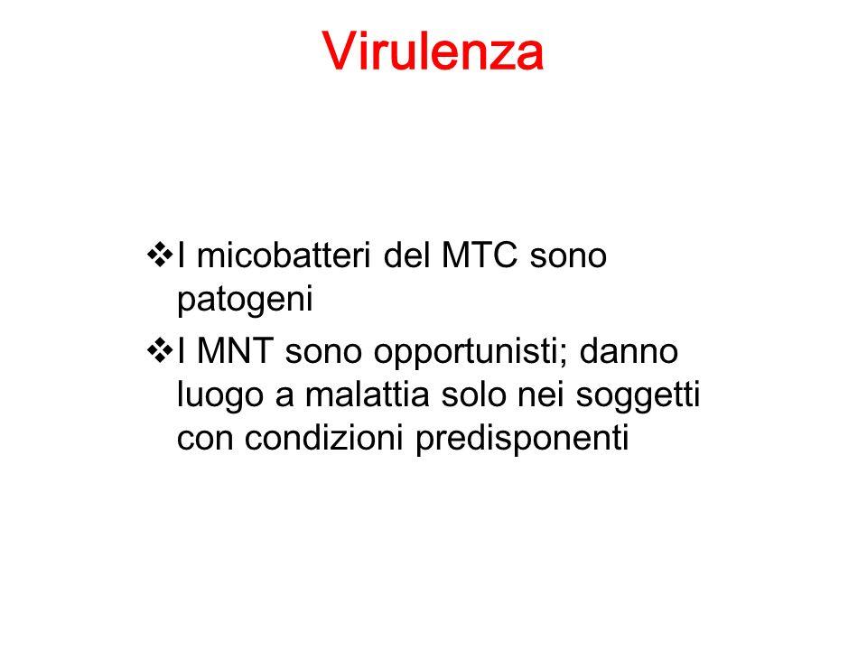 Virulenza I micobatteri del MTC sono patogeni I MNT sono opportunisti; danno luogo a malattia solo nei soggetti con condizioni predisponenti