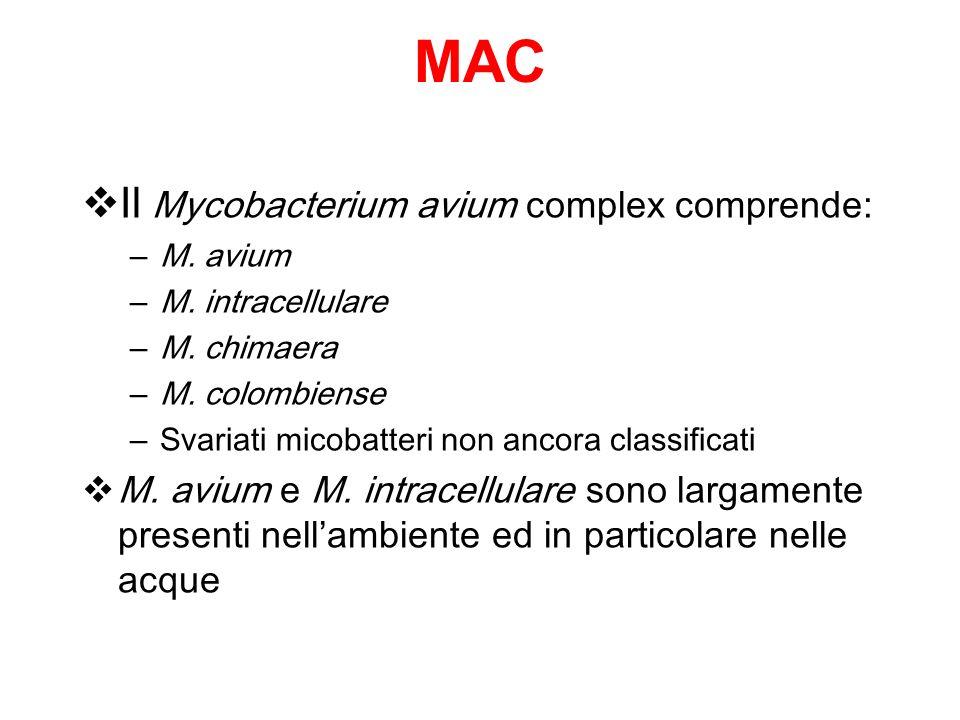 MAC Il Mycobacterium avium complex comprende: – M. avium – M. intracellulare – M. chimaera – M. colombiense – Svariati micobatteri non ancora classifi