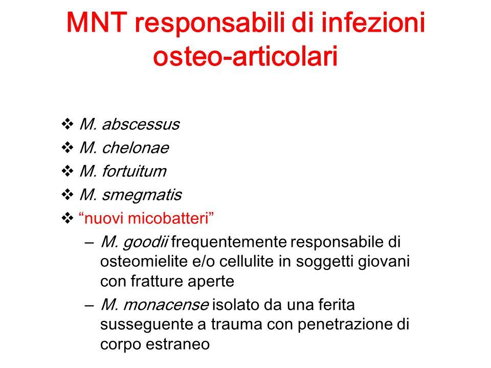 MNT responsabili di infezioni osteo-articolari M. abscessus M. chelonae M. fortuitum M. smegmatis nuovi micobatteri – M. goodii frequentemente respons