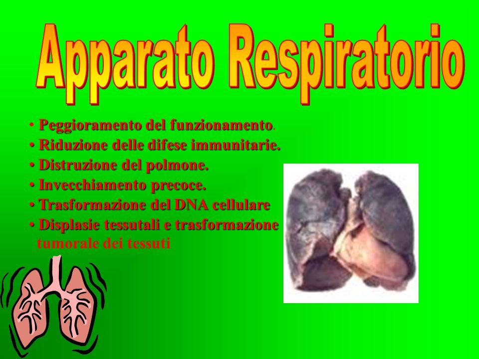 Il fumo provoca gravi danni all organismo: Apparato respiratorio. Apparato respiratorio. Apparato circolatorio. Apparato circolatorio. Apparato digere