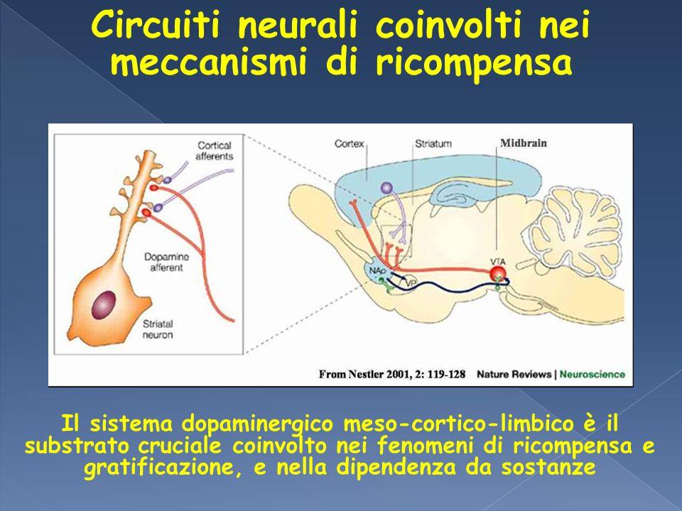 Circuiti neurali coinvolti nei meccanismi di ricompensa Il sistema dopaminergico meso-cortico-limbico è il substrato cruciale coinvolto nei fenomeni d