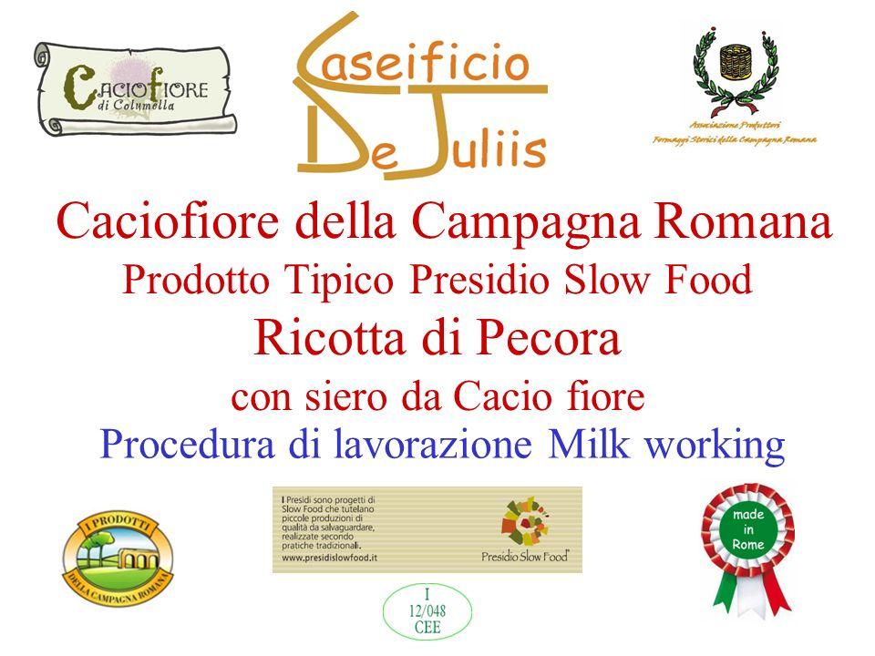 Caciofiore della Campagna Romana Prodotto Tipico Presidio Slow Food Ricotta di Pecora con siero da Cacio fiore Procedura di lavorazione Milk working