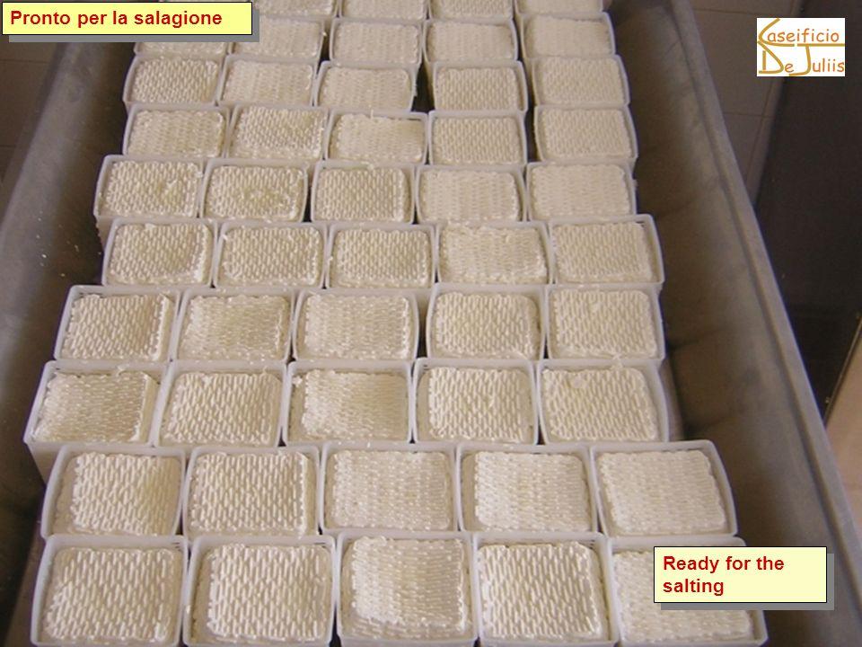 Pronto per la salagione Ready for the salting