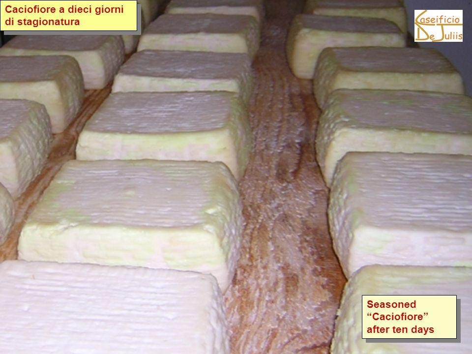 Caciofiore a dieci giorni di stagionatura Seasoned Caciofiore after ten days