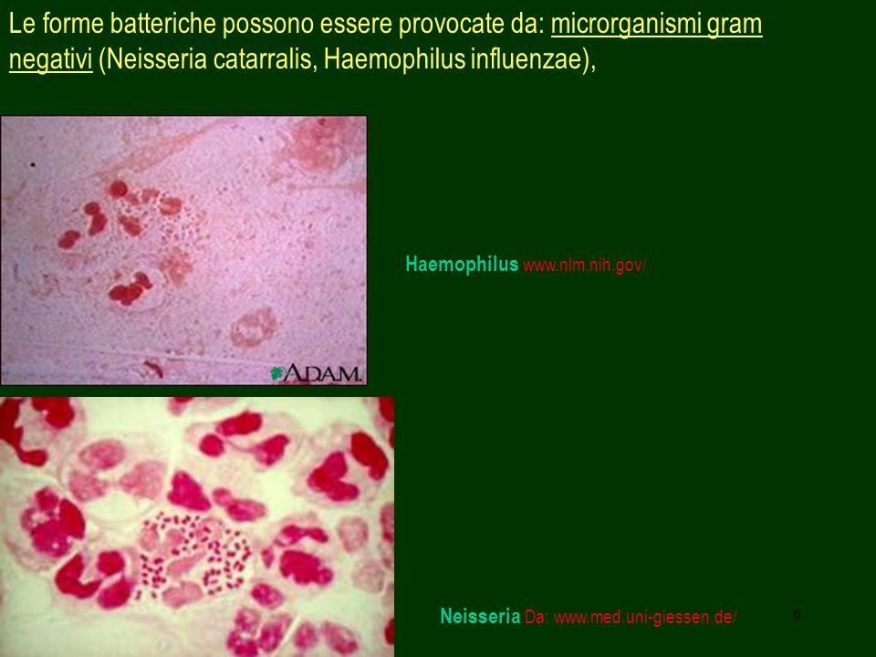 6 Le forme batteriche possono essere provocate da: microrganismi gram negativi (Neisseria catarralis, Haemophilus influenzae), Neisseria Da: www.med.u