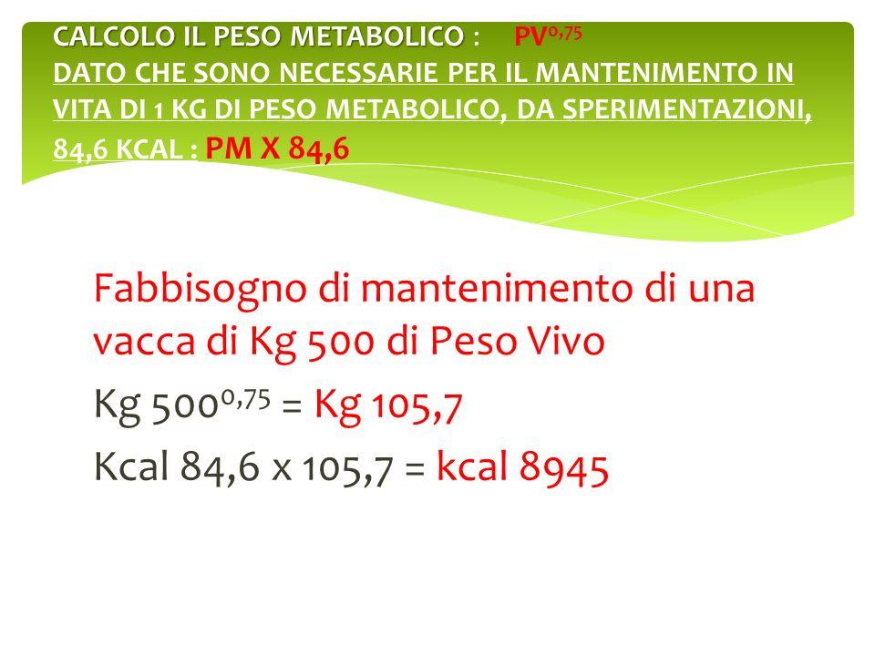 Fabbisogno di mantenimento di una vacca di Kg 500 di Peso Vivo Kg 500 0,75 = Kg 105,7 Kcal 84,6 x 105,7 = kcal 8945 CALCOLO IL PESO METABOLICO CALCOLO