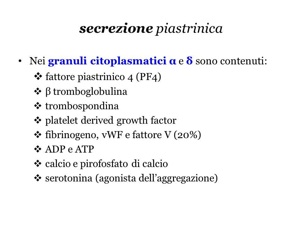 secrezione piastrinica Nei granuli citoplasmatici α e δ sono contenuti: fattore piastrinico 4 (PF4) β tromboglobulina trombospondina platelet derived