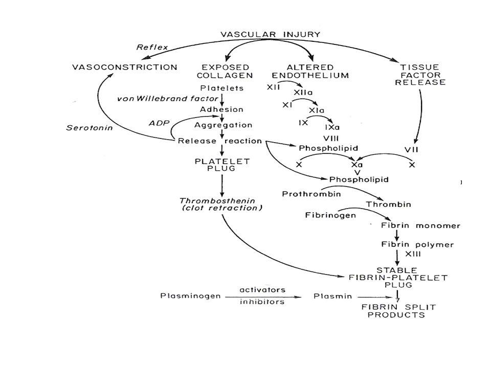 Trattamento delle malattie emorragiche congenite I diversi concentrati dei fattori della coagulazione si distinguono in: – A/C) prodotti da plasma fresco – D1) concentrati plasma derivati – D2) prodotti da tecniche di ricombinazione genetica