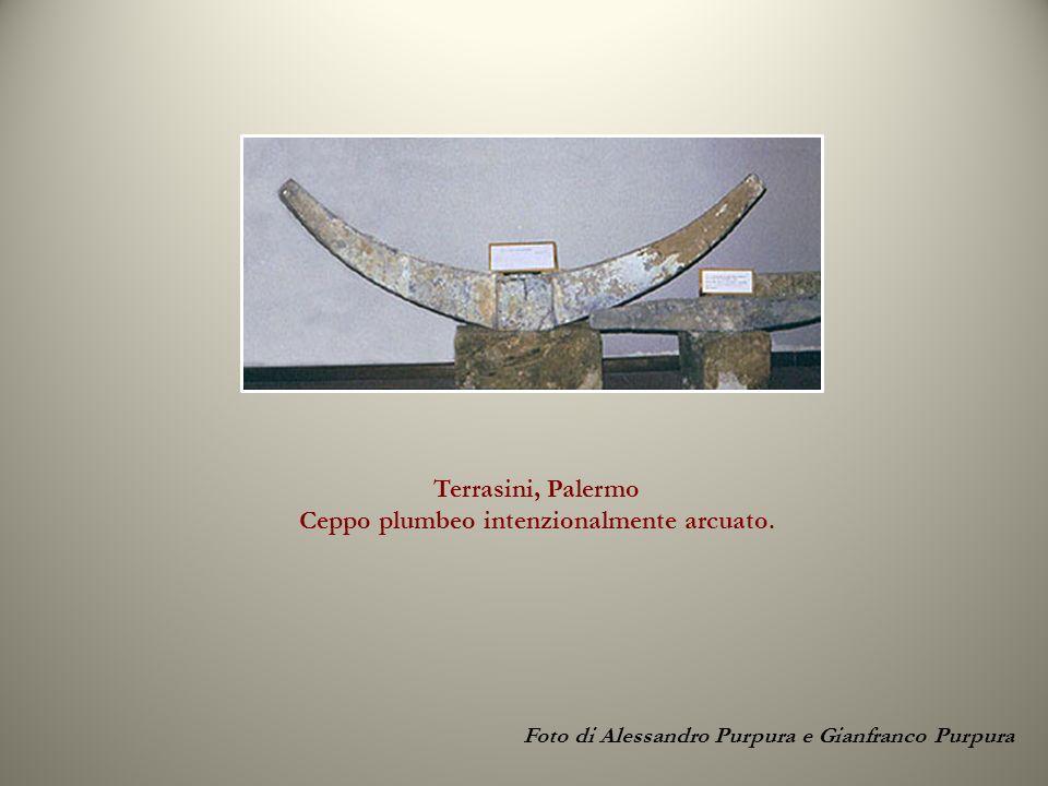 Terrasini, Palermo Ceppo plumbeo intenzionalmente arcuato. Foto di Alessandro Purpura e Gianfranco Purpura
