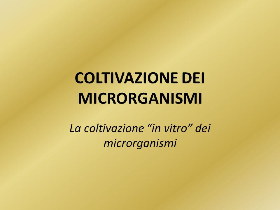 COLTIVAZIONE DEI MICRORGANISMI La coltivazione in vitro dei microrganismi