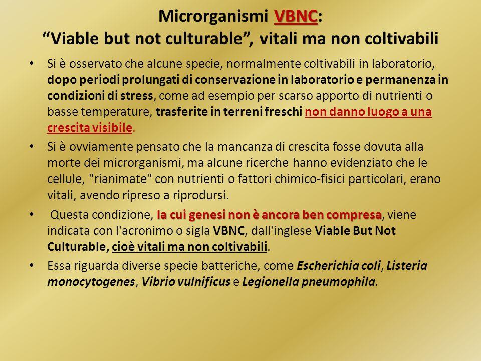 VBNC Microrganismi VBNC: Viable but not culturable, vitali ma non coltivabili Si è osservato che alcune specie, normalmente coltivabili in laboratorio