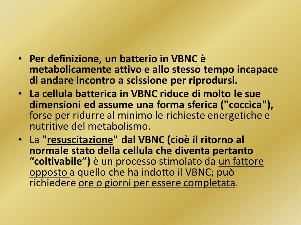Per definizione, un batterio in VBNC è metabolicamente attivo e allo stesso tempo incapace di andare incontro a scissione per riprodursi. La cellula b