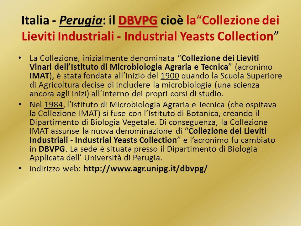 DBVPG Italia - Perugia: il DBVPG cioè laCollezione dei Lieviti Industriali - Industrial Yeasts Collection La Collezione, inizialmente denominata Colle