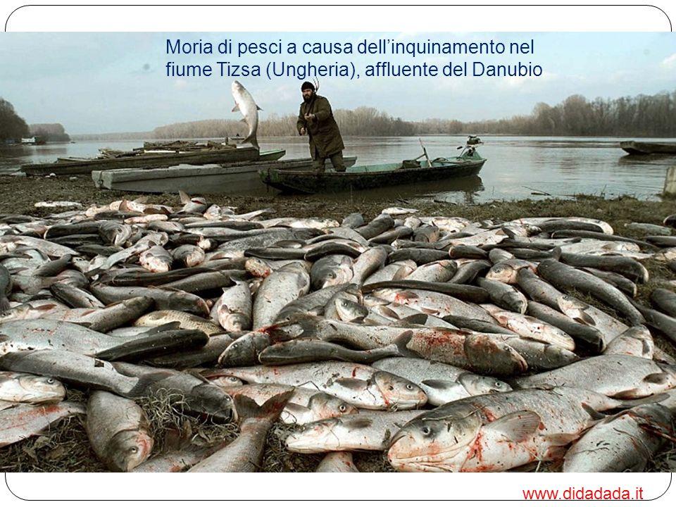 Il Danubio è uno dei fiumi più sfruttati al mondo Il suo corso è stato pesantemente alterato dalla costruzione di dighe e dal prelievo di acqua per sc