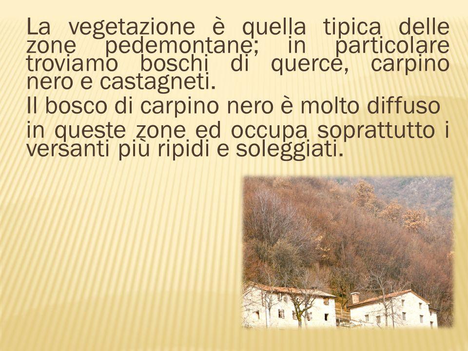 Il castagneto è una formazione boschiva caratterizzata dalla presenza del castagno.