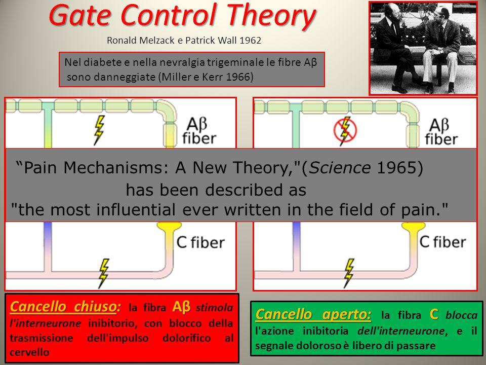 8 Gate Control Theory Gate Control Theory Ronald Melzack e Patrick Wall 1962 Cancello chiuso: Aβ Cancello chiuso: la fibra Aβ stimola l'interneurone i