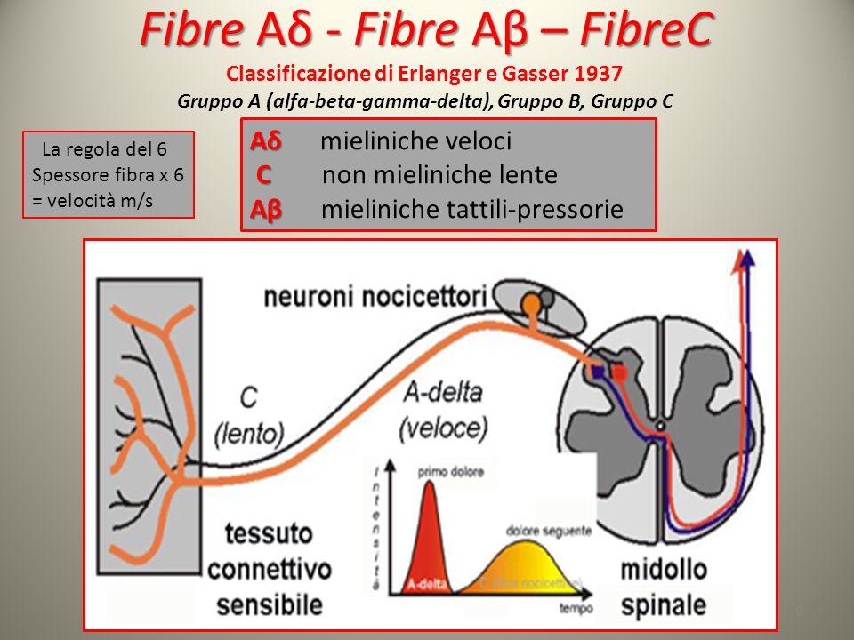 Fibre Aδ - Fibre Aβ – FibreC Fibre Aδ - Fibre Aβ – FibreC Classificazione di Erlanger e Gasser 1937 Gruppo A (alfa-beta-gamma-delta), Gruppo B, Gruppo