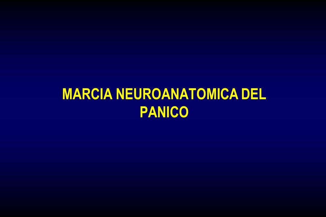 PANICO RESPIRATORIO: MODELLO INTEGRATO RESPIRAZIONE CERVELLO OMEOSTATICO Controllo Involontario (Tronco Encefalico) CERVELLO RAZIONALE Controllo Volon