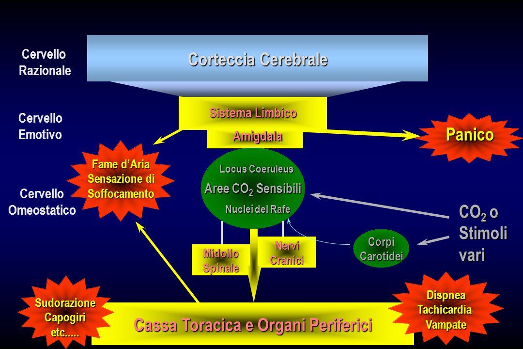 Corteccia Cerebrale Aree CO 2 Sensibili Locus Coeruleus Nuclei del Rafe MidolloSpinale NerviCranici Cassa Toracica e Organi Periferici CorpiCarotidei