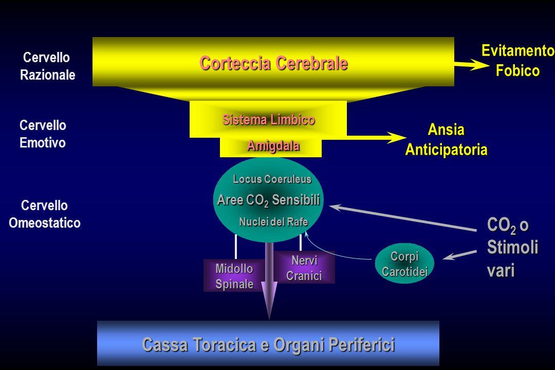 Corteccia Cerebrale Sistema Limbico Aree CO 2 Sensibili Locus Coeruleus Nuclei del Rafe MidolloSpinale NerviCranici Cassa Toracica e Organi Periferici