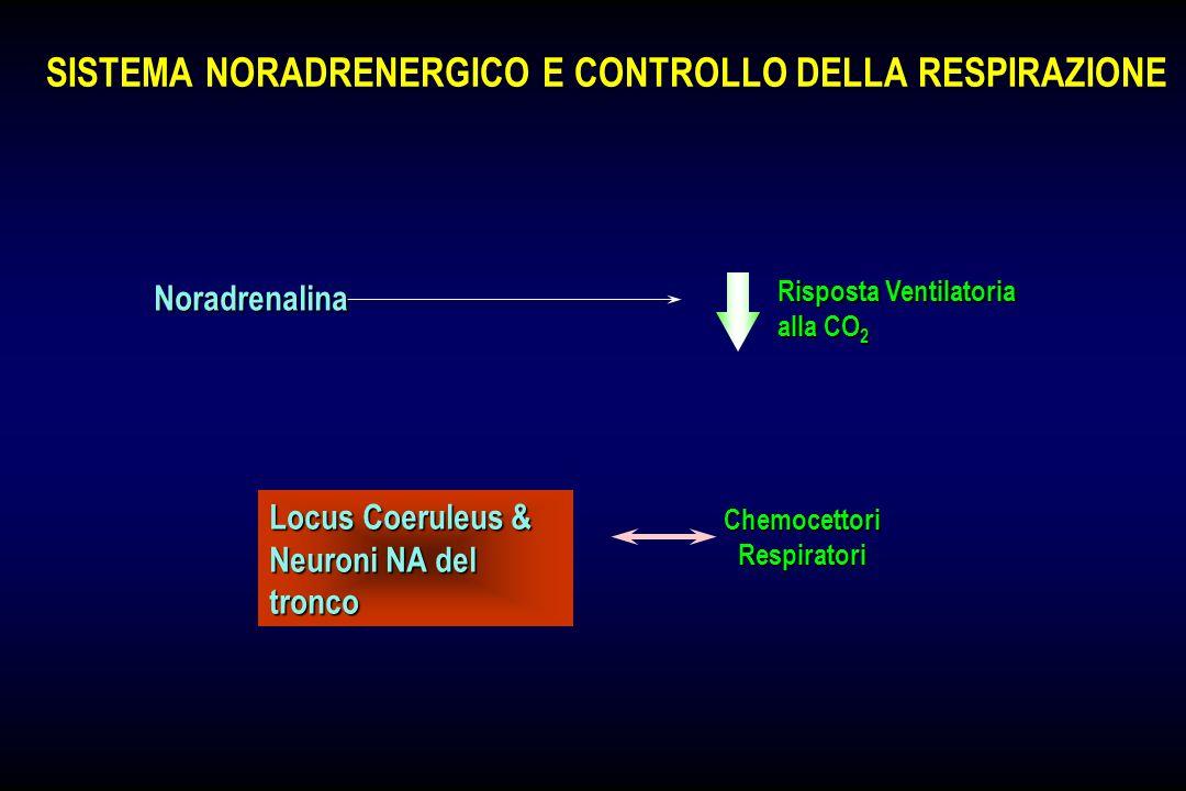 SISTEMA SEROTONINERGICO E CONTROLLO DELLA RESPIRAZIONE SISTEMA SEROTONINERGICO E CONTROLLO DELLA RESPIRAZIONE Ipercapnia Utilizzazione 5-HT nel SNC Si