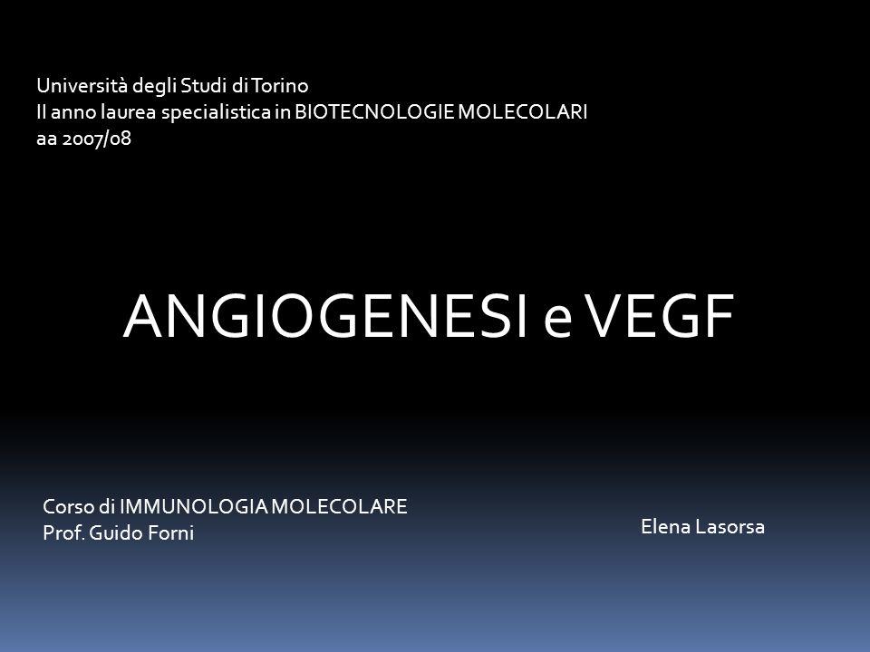 ANGIOGENESI e VEGF Università degli Studi di Torino II anno laurea specialistica in BIOTECNOLOGIE MOLECOLARI aa 2007/08 Elena Lasorsa Corso di IMMUNOLOGIA MOLECOLARE Prof.