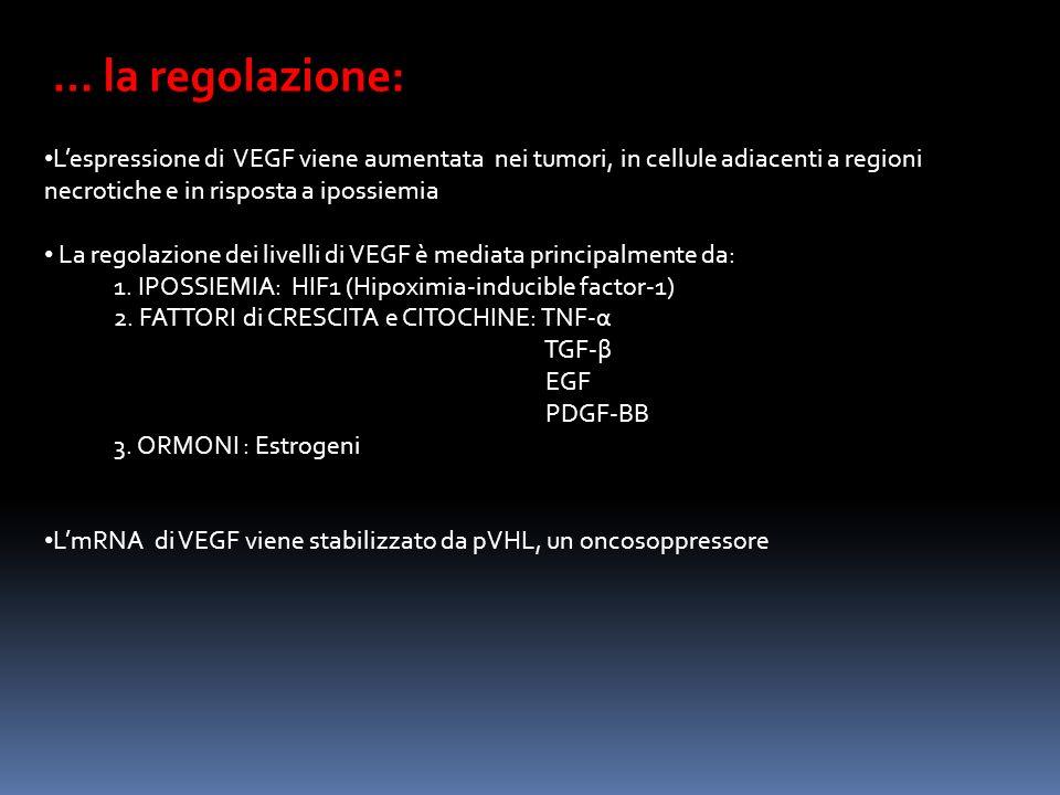 … la regolazione: Lespressione di VEGF viene aumentata nei tumori, in cellule adiacenti a regioni necrotiche e in risposta a ipossiemia La regolazione dei livelli di VEGF è mediata principalmente da: 1.