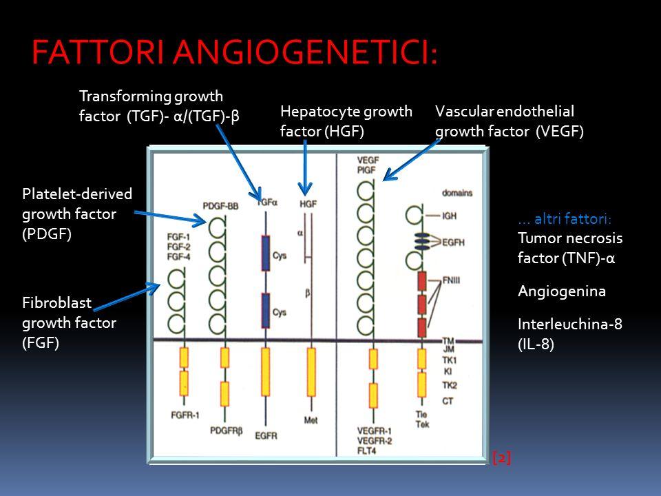 FATTORI ANGIOGENETICI: Vascular endothelial growth factor (VEGF) [2]