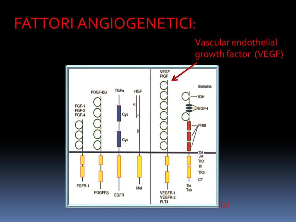 VEGF … il gene: è composto da 8 esoni separati da 7 introni la regione codificante è lunga circa 14 kb il gene umano è localizzato sul cromosoma 6p21.3 è presente in quattro diverse isoforme costituite, rispettivamente, da 212, 165, 189 e 206 aminoacidi VEGF 165 è la specie molecolare predominante mentre VEGF 206 è la più rara [3]