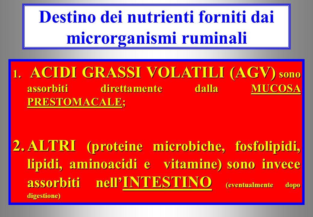 SANGUE Esofago ReticoloReticolo Rumine Omaso AbomasoAbomasoAbomasoAbomaso Duo deno intestinointestino Assorbimento nutrienti di origine ruminale AGV P