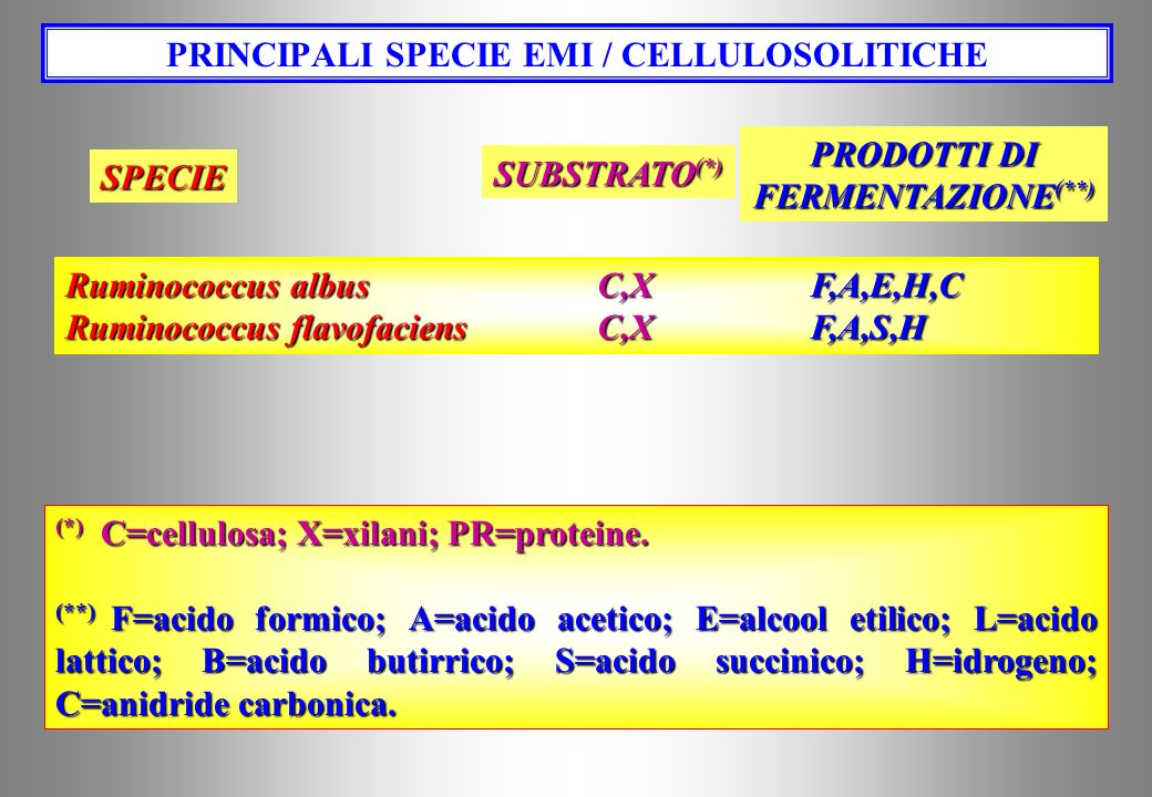 1.EMI / CELLULOSO LITICI Bacteroides succinogenes, Ruminococcus albus, R. flavefaciens. 2.AMILO LITICI Fibrobacter succinogenes, Butyrivibrio fibrisol