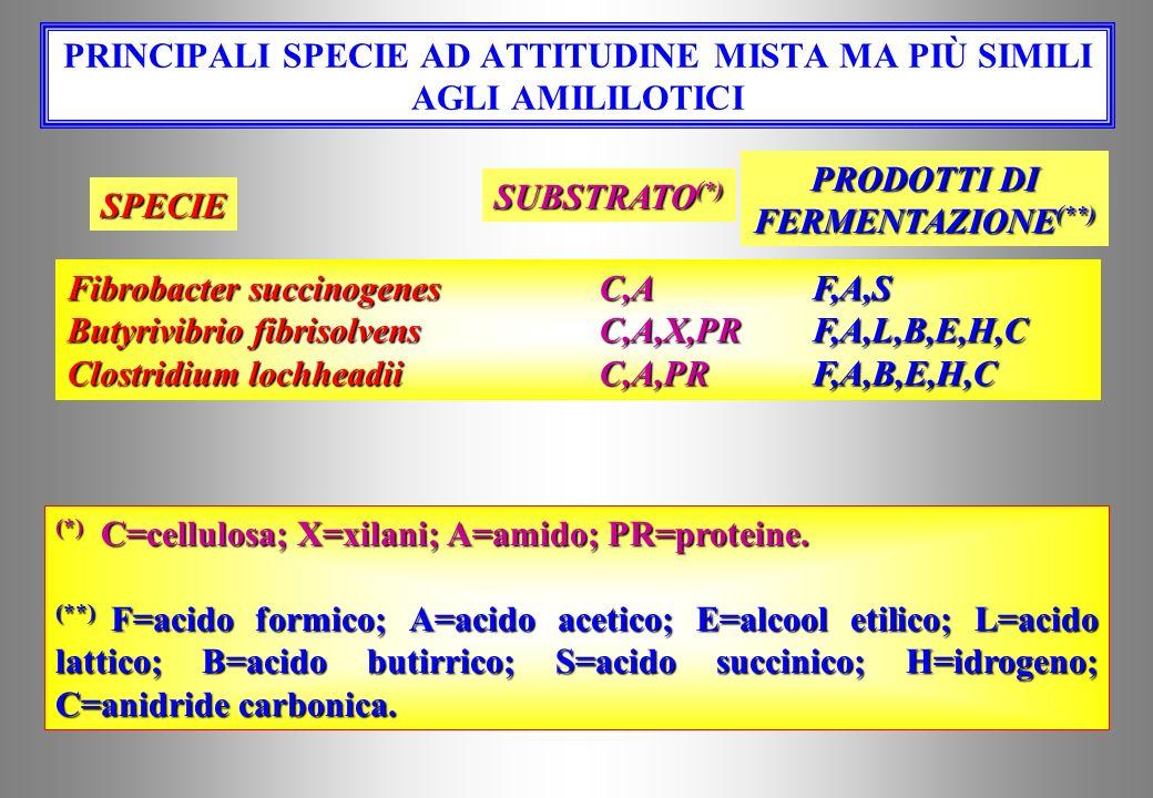 PRINCIPALI SPECIE EMI / CELLULOSOLITICHE Ruminococcus albusC,XF,A,E,H,C Ruminococcus flavofaciensC,XF,A,S,H (*) C=cellulosa; X=xilani; PR=proteine. (*