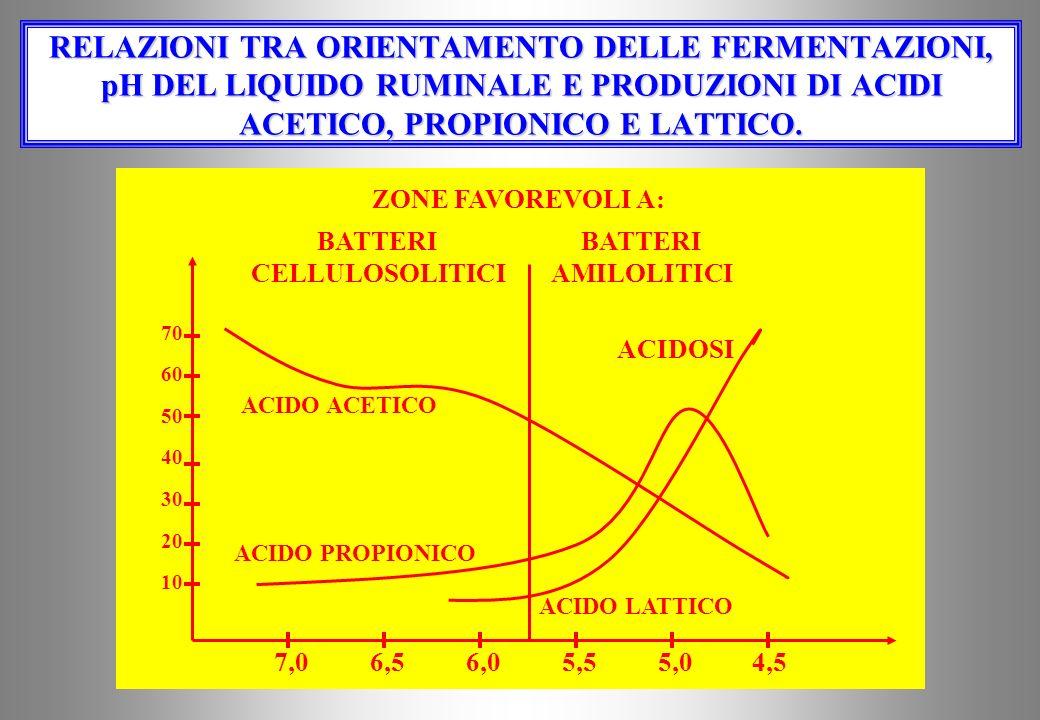PRODUTTIVITÀ SPECIFICA DI AGV Sarà massima per i concentrati altamente fermentescibili (come il melasso di c.z.) e minima per i foraggi grossolani ric