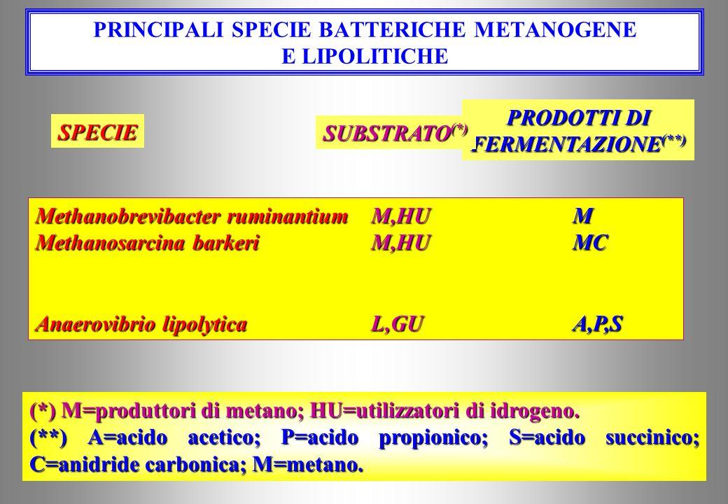 PRINCIPALI SPECIE CHE UTILIZZANO ZUCCHERI SOLUBILI Spirochete spp.P,SSF,A,L,S,E Megasphaera elsdeniiSS,LUA,P,B,V,H,C Lactobacillus spp.SSL Eusobacteri