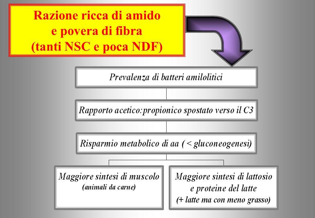 Razione ricca di amido e povera di fibra (tanti NSC e poca NDF)