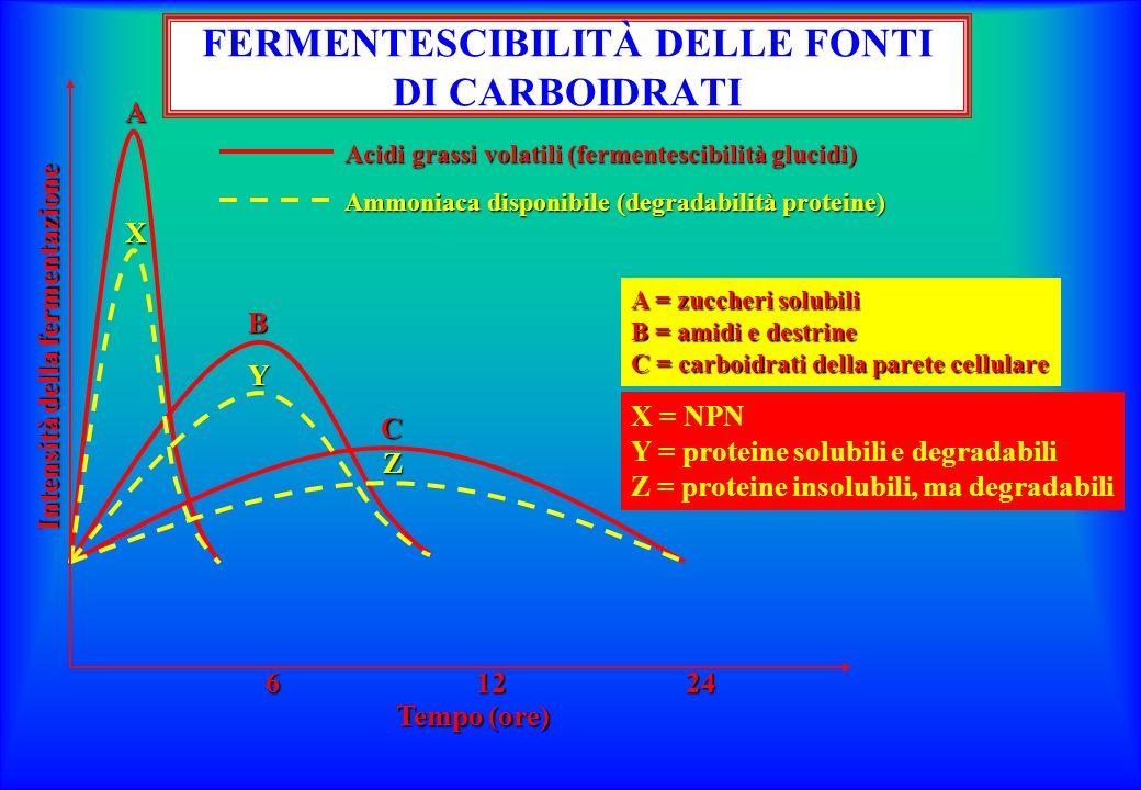 A = zuccheri solubili B = amidi e destrine C = carboidrati della parete cellulare Intensità della fermentazione Tempo (ore) 61224 Acidi grassi volatili (fermentescibilità glucidi) Ammoniaca disponibile (degradabilità proteine) A X B Y C Z X = NPN Y = proteine solubili e degradabili Z = proteine insolubili, ma degradabili FERMENTESCIBILITÀ DELLE FONTI DI CARBOIDRATI