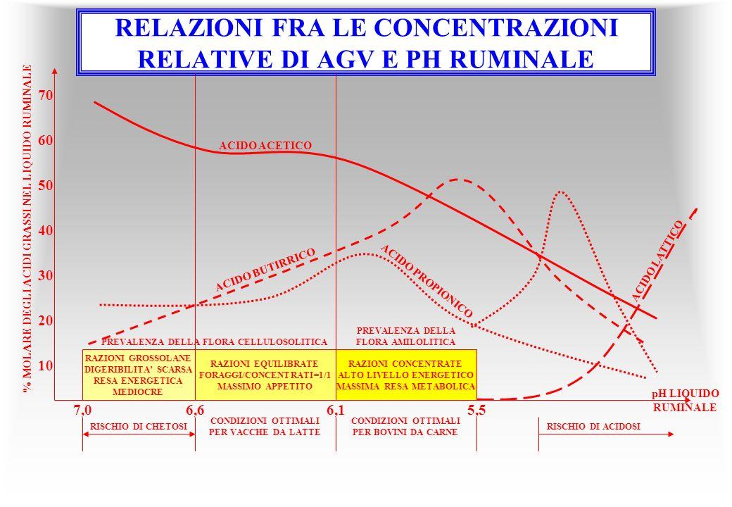 7,06,66,1 RAZIONI GROSSOLANE DIGERIBILITA SCARSA RESA ENERGETICA MEDIOCRE RAZIONI CONCENTRATE ALTO LIVELLO ENERGETICO MASSIMA RESA METABOLICA RAZIONI EQUILIBRATE FORAGGI/CONCENTRATI=1/1 MASSIMO APPETITO PREVALENZA DELLA FLORA CELLULOSOLITICA PREVALENZA DELLA FLORA AMILOLITICA ACIDO ACETICO ACIDO BUTIRRICO ACIDO PROPIONICO ACIDO LATTICO 5,5 70 60 50 40 30 20 10 RISCHIO DI CHETOSI CONDIZIONI OTTIMALI PER VACCHE DA LATTE CONDIZIONI OTTIMALI PER BOVINI DA CARNE RISCHIO DI ACIDOSI % MOLARE DEGLI ACIDI GRASSI NEL LIQUIDO RUMINALE pH LIQUIDO RUMINALE RELAZIONI FRA LE CONCENTRAZIONI RELATIVE DI AGV E PH RUMINALE