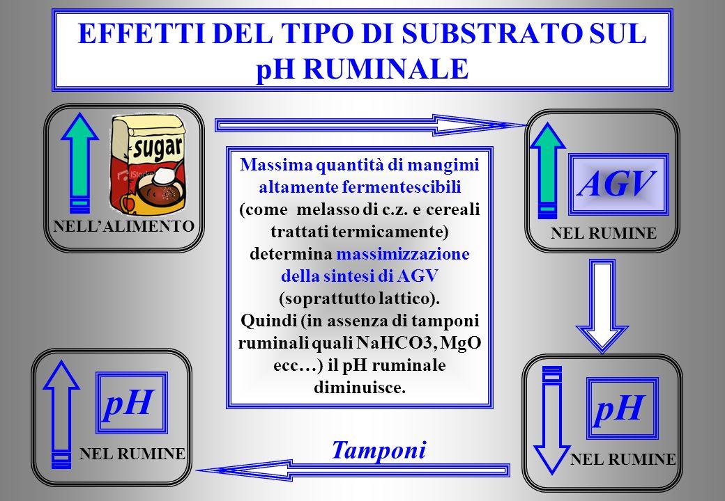 EFFETTI DEL TIPO DI SUBSTRATO SUL pH RUMINALE Massima quantità di mangimi altamente fermentescibili (come melasso di c.z.