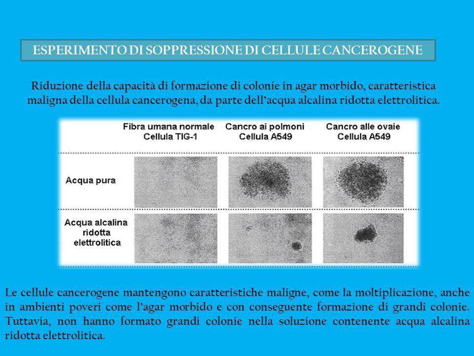 ESPERIMENTO DI SOPPRESSIONE DI CELLULE CANCEROGENE Riduzione della capacità di formazione di colonie in agar morbido, caratteristica maligna della cel