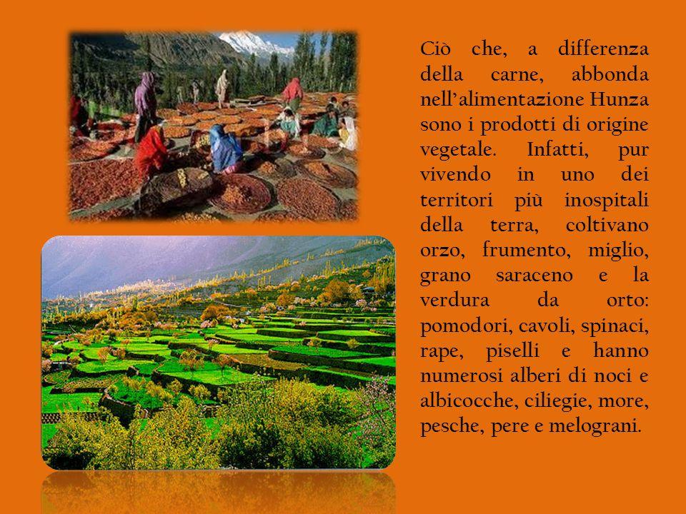Ciò che, a differenza della carne, abbonda nellalimentazione Hunza sono i prodotti di origine vegetale. Infatti, pur vivendo in uno dei territori più