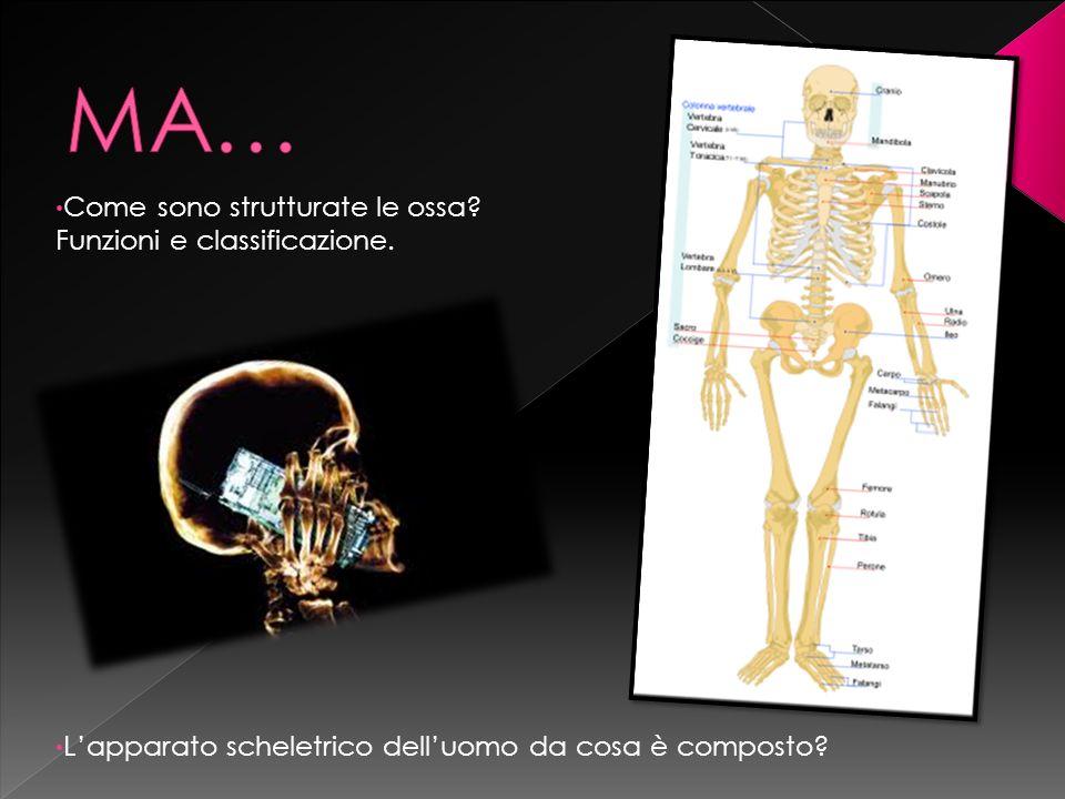 Come sono strutturate le ossa? Funzioni e classificazione. Lapparato scheletrico delluomo da cosa è composto?