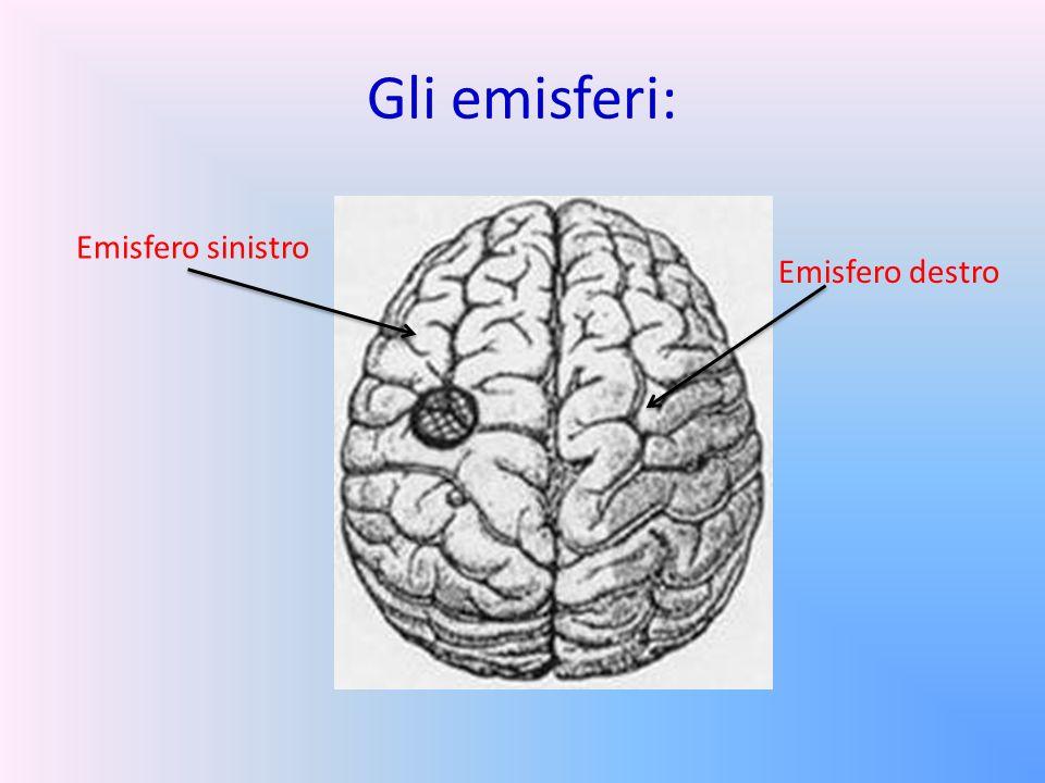 Il cervello è formato da una parte esterna e una interna: PARTE ESTERNA:PARTE INTERNA: Costituita da una sostanza grigia spessa 2-4 mm formata da 3 tipi di cellule nervose.
