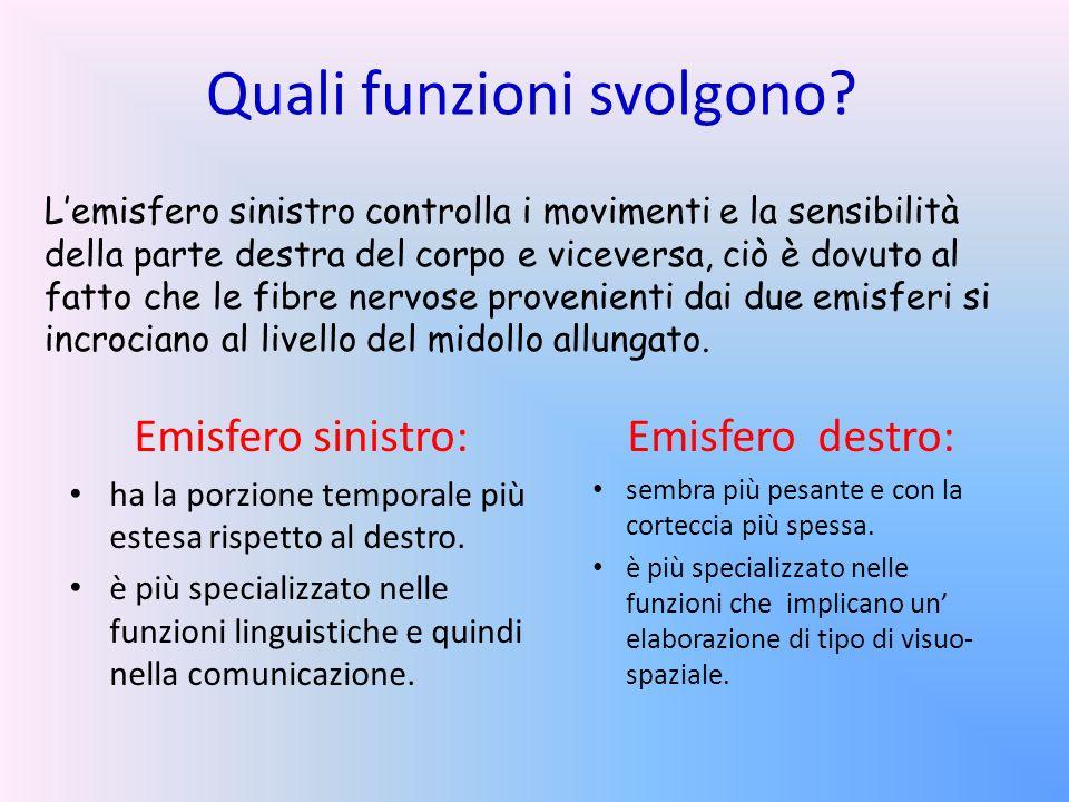 Quali funzioni svolgono? Emisfero sinistro: ha la porzione temporale più estesa rispetto al destro. è più specializzato nelle funzioni linguistiche e
