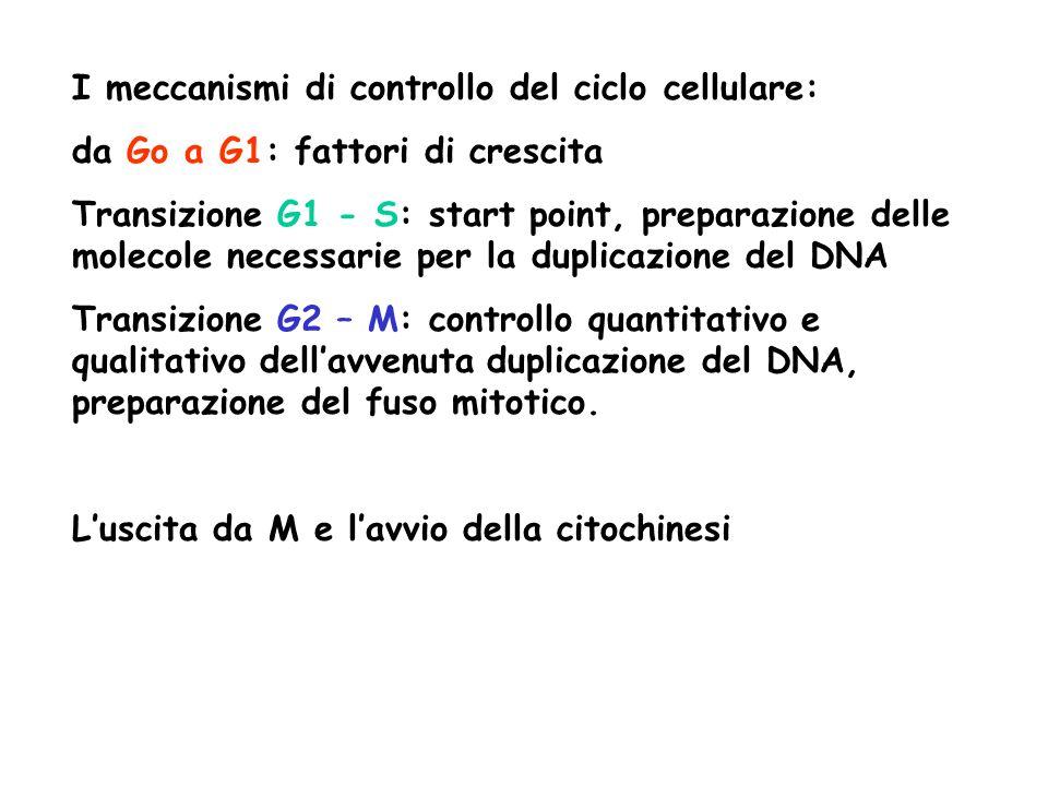 I meccanismi di controllo del ciclo cellulare: da Go a G1: fattori di crescita Transizione G1 - S: start point, preparazione delle molecole necessarie per la duplicazione del DNA Transizione G2 – M: controllo quantitativo e qualitativo dellavvenuta duplicazione del DNA, preparazione del fuso mitotico.