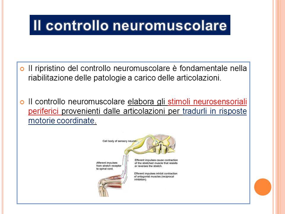 Il ripristino del controllo neuromuscolare è fondamentale nella riabilitazione delle patologie a carico delle articolazioni.